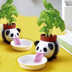 Peropon Panda Basilic à faire pousser