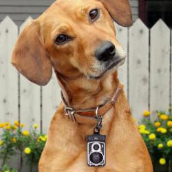 Rolldog, appareil photo distributeur de sacs pour chien
