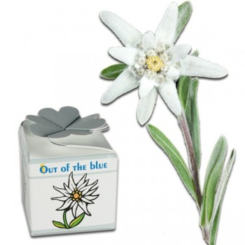 Mini kit de plantation Edelweiss