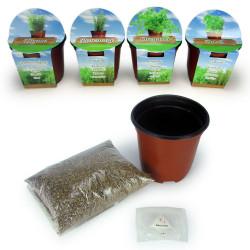 Kit 4 plantes aromatiques à faire pousser