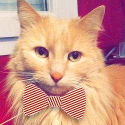 Accessoires selfies pour chat