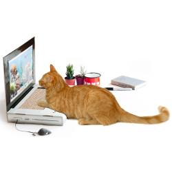 Grattoir pour chat ordinateur et sa souris