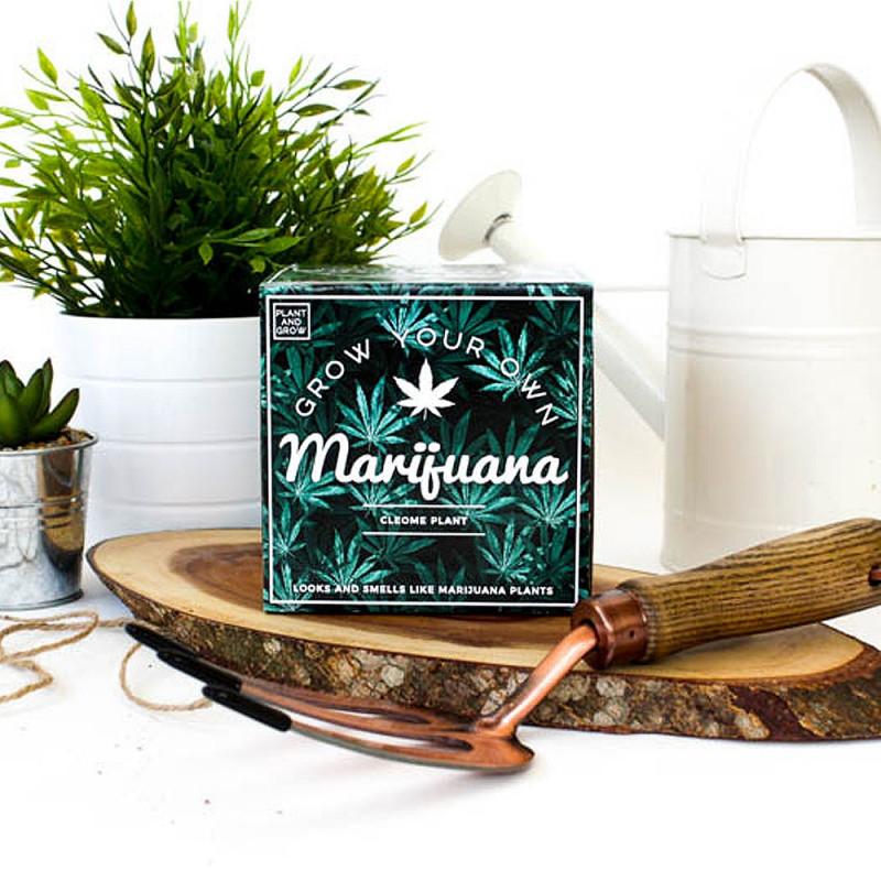 Kit à faire pousser Marijuana