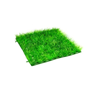 Morceau de prairie pelouse