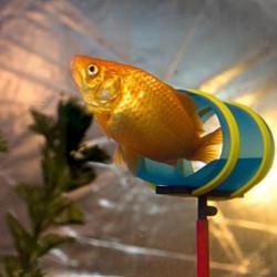 Centre de dressage pour poisson rouge