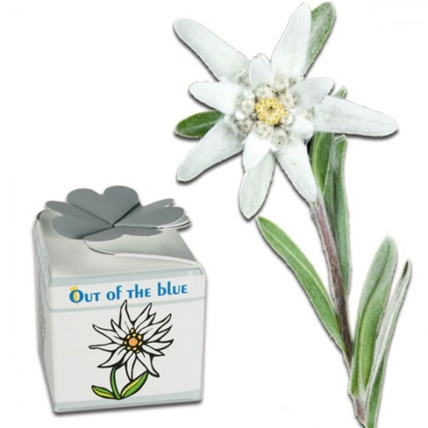 Mini kit de plantation Edelweiss